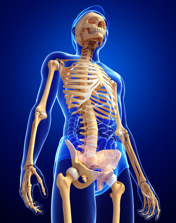 3d person: Illustration of human skeleton side view Stock Photo