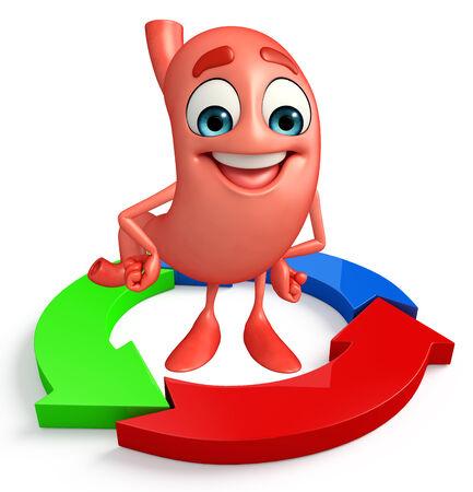 sistema digestivo: Personaje de dibujos animados de estómago con el diagrama de flecha circular