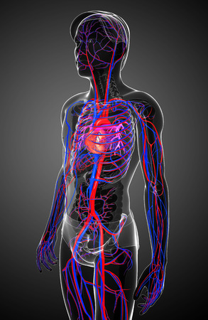 human blood circulation: Illustration of Male circulatory system