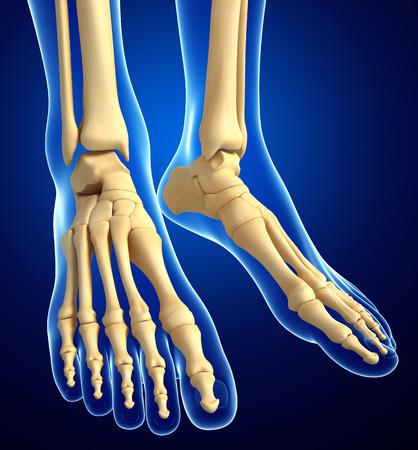 Illustration of human foot artwork