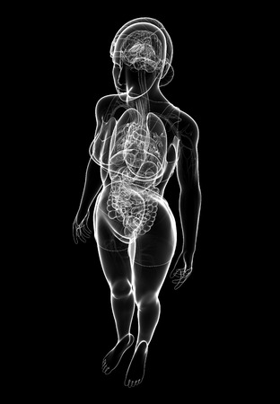 Illustration of female x-ray digestive and nervous system artwork illustration