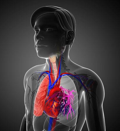 aparato respiratorio: Ilustración de la anatomía masculina pulmones