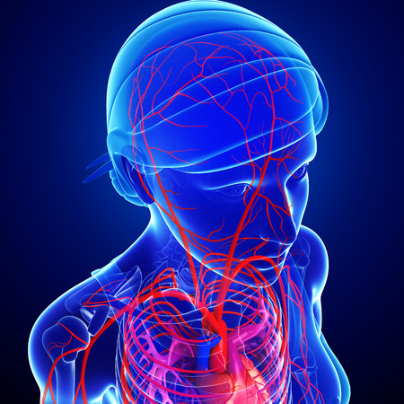 arteries: Illustration of Female head arteries Stock Photo