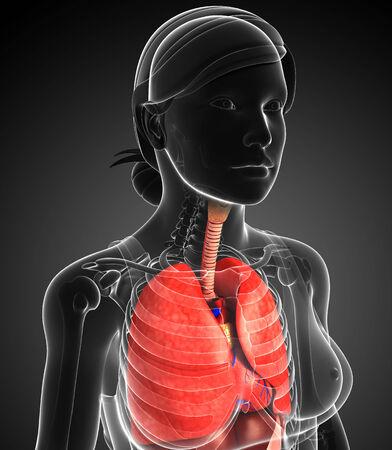 pleural fluid: Illustration of female respiratory system