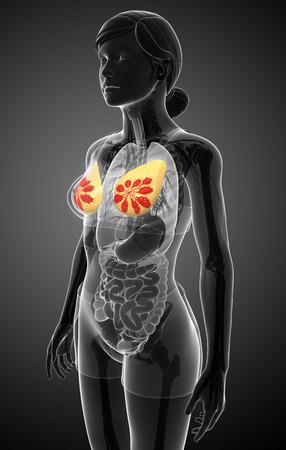 nude female: Illustration of female breast artwork