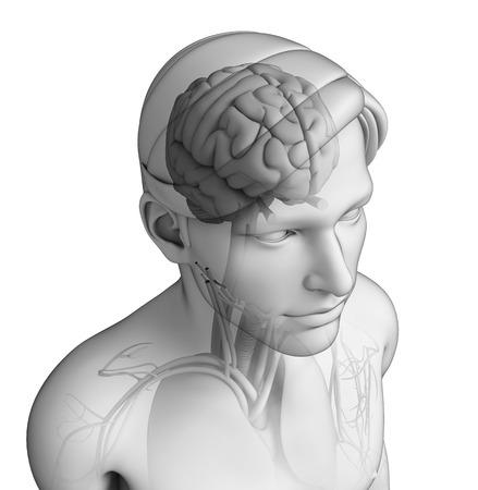 ribcage: Illustration of human head anatomy