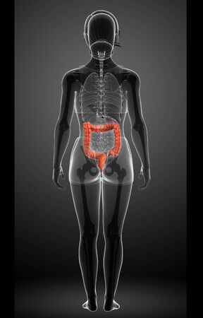 descending colon: Illustration of large intestine anatomy Stock Photo