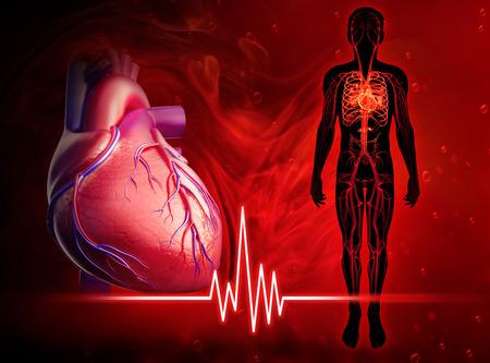 인간의 심장 박동도의 그림 스톡 콘텐츠
