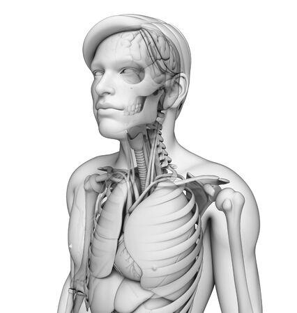 asthmatic: Illustration of human body respiratory system