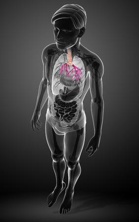 urinary tract: Illustration of male throat anatomy Stock Photo