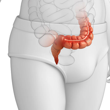 ascending colon: Illustration of Male large intestine anatomy Stock Photo