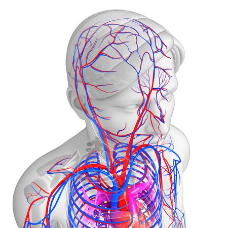 vasos sanguineos: Ilustración del sistema circulatorio cerebral