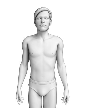 human body: Illustration of human body anatomy