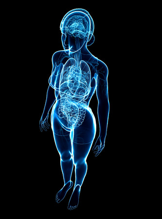 digestive system: Illustration of female x-ray digestive and nervous system artwork