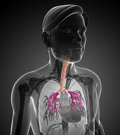 throat: Illustration of male throat anatomy Stock Photo