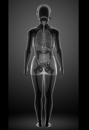 female large intestine: Illustration of female xray digestive system Stock Photo