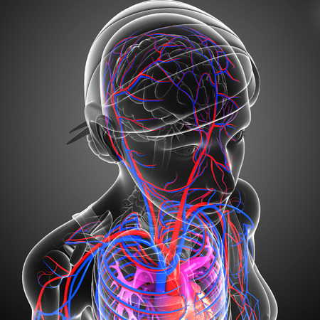 human health: Ilustraci�n del sistema circulatorio cerebral