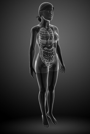 Illustration of  xray digestive female artwork illustration