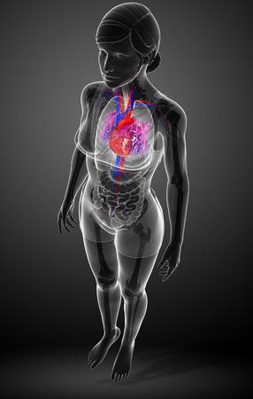 heart anatomy: Illustration of Female heart anatomy Stock Photo