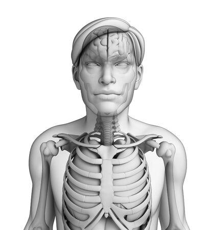 Illustration of human body respiratory system illustration