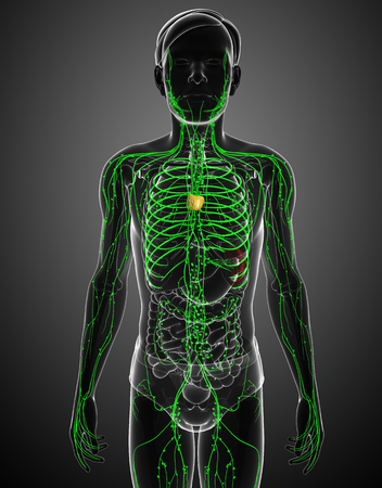 lymph vessels: Illustration of male body lymphatic system
