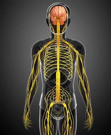 sistema nervioso: Ilustraci�n de obra masculina sistema nervioso Foto de archivo