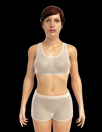 3d rendered illustration of female body anatomy