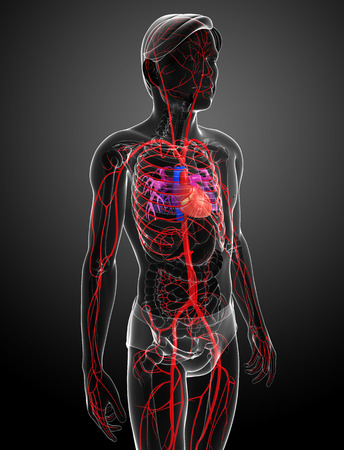 human blood circulation: 3d rendered illustration of male arterial system Stock Photo