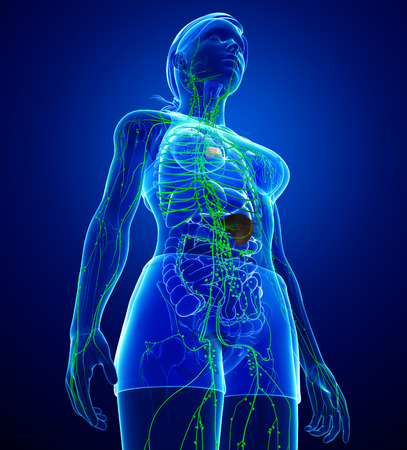 female body: Illustration of female body lymphatic system