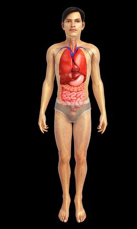 corpo umano: 3d ha reso l'illustrazione di opere d'arte digerente Archivio Fotografico