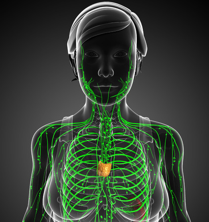 lymph vessels: Illustration of female body lymphatic system