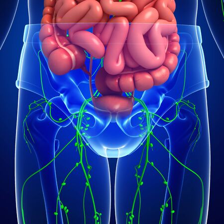 lymph nodes: Illustration of human body lymphatic and digestive system artwork