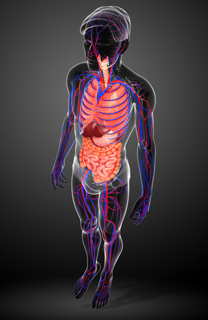 male large intestine: Digestive and circulatory system of male body artwork