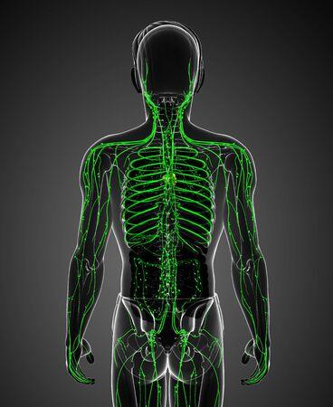 lymph vessels: Illustration of male body lymphatic system