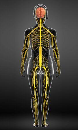 Ilustración de la Mujer obra del sistema nervioso
