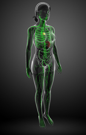 lymph nodes: Illustration of female body lymphatic system
