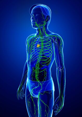 lymphatic system: Illustration of male body lymphatic system