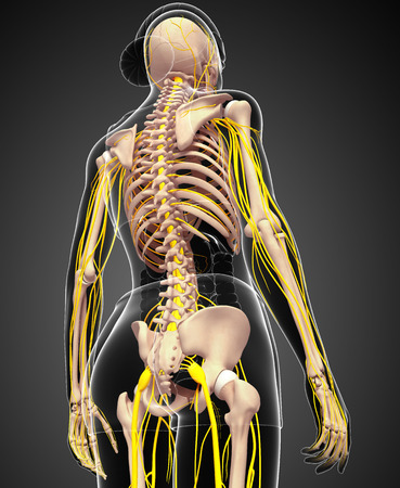 nervous: Illustration of female skeleton with nervous system Stock Photo