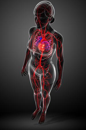 capillary: 3d rendered illustration of female arterial system Stock Photo