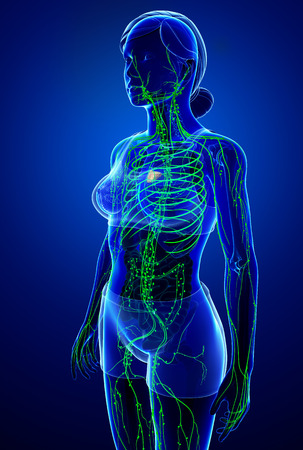 lymph: Illustration of female body lymphatic system