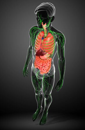 thymus: Illustration of Male body lymphatic and digestive system artwork Stock Photo