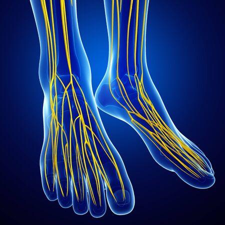 sistema nervioso: Ilustraci�n del sistema nervioso humano