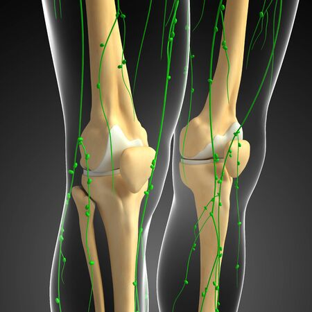 lymph vessels: Illustration of human skeleton with lymphatic system Stock Photo