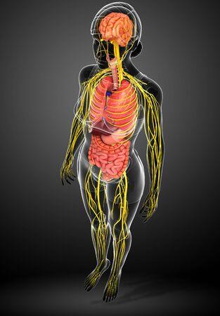 cuerpo femenino: Ilustraci�n del cuerpo de la mujer con las ilustraciones sistema nervioso y digestivo