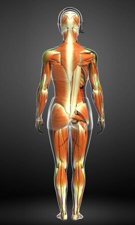 rendered: 3d rendered illustration of male muscles anatomy