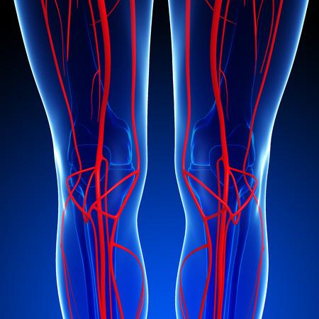 3d rendered illustration of human arterial system Stock Illustration - 44276324