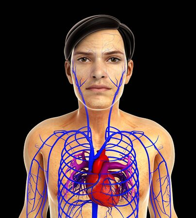 arteries: 3d rendered illustration of male heart anatomy