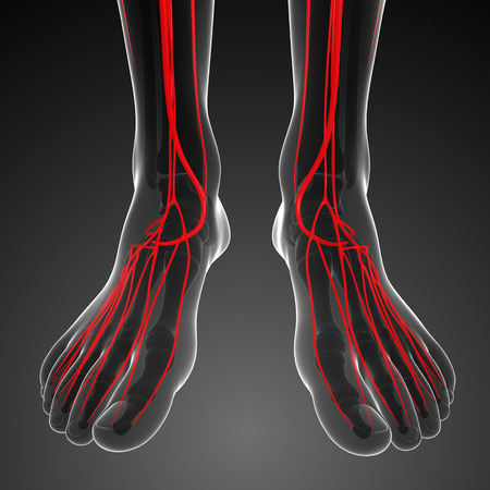 healthy arteries: 3d rendered illustration of human arterial system Stock Photo