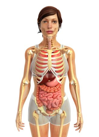 3d Rendered Illustration Of Male Digestive System Stock Photo ...