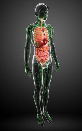 lymph: Illustration of Male body lymphatic and digestive system artwork Stock Photo